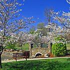 Janssen Park Spring by Richard Lawry