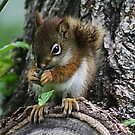 The Most Adorable Baby Squirrel by Teresa Zieba