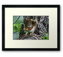 The Most Adorable Baby Squirrel Framed Print