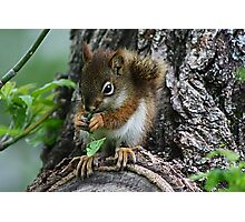 The Most Adorable Baby Squirrel Photographic Print