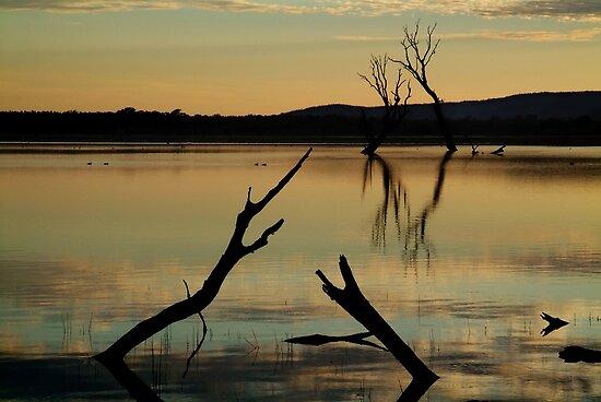 Dead Trees, Lake Fyans, Grampians. by Joe Mortelliti