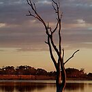 First Light,Lake Fyans Grampians by Joe Mortelliti