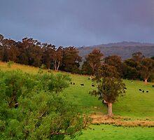 Warm Glow,Otway Farmlands by Joe Mortelliti