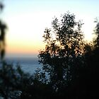 View from dorm, Esalen by Jessica Glade