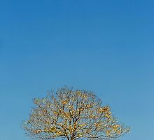 The Yellow Tree - Boonah Qld Australia by Beth  Wode
