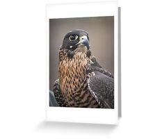 Peregrine Falcon Portrait Greeting Card