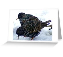 Young Starlings Greeting Card