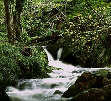 Tributary Burn, Rive Dee, Aberdeesnhire by Mark Mair