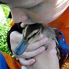 Cuddling ~ duckling by Jan  Tribe