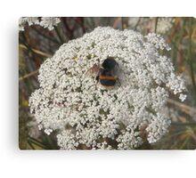 Bumble Bee on Flowers Metal Print