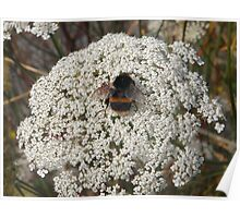 Bumble Bee on Flowers Poster