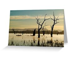 Dead Wood in the Morning Mist,Lake Fyans, Grampians Greeting Card