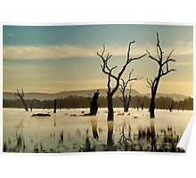 Dead Wood in the Morning Mist,Lake Fyans, Grampians Poster