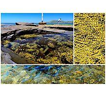 Summer at the Coast - Pebbly Beach, NSW, Australia Photographic Print