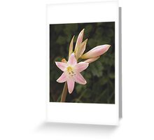 Easter lily - Barossa Valley South Australia Greeting Card