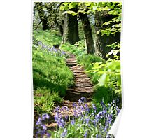 Spring path Poster