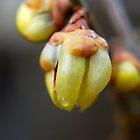 Spring has sprung by Rowan  Lewgalon