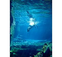 Diving Photographic Print