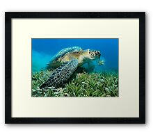 The Vegetarian Framed Print