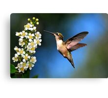 Just Looking Canvas Print