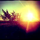 Morning sun by Melissa Drummond
