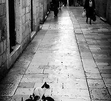 Cat and her kittens on Dubrovnik street. Dubrovnik, Croatia by Sheldon Levis