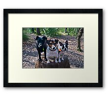 Family Pack Framed Print