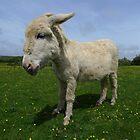 Donkey  by Liberty Benedict