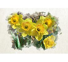 Spring Daffodils Watercolor Art Photographic Print