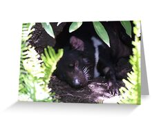 Good Night Sleep Greeting Card