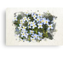 Bluet Flowers Watercolor Art Canvas Print