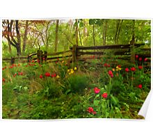 Dreamy Forest With Tulips - Impressions Of Spring Poster