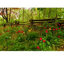 Dreamy Forest With Tulips - Impressions Of Spring Photographic Print