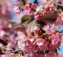 Springtime Makes Me Want to Spread My Wings by Wolf Read