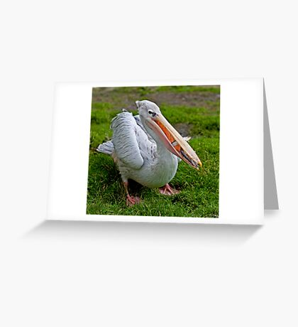 A Wonderful Bird is the Pelican... Greeting Card