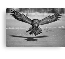 Great Grey Owl B&W Metal Print