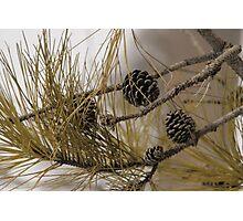 Winter Seeds Photographic Print