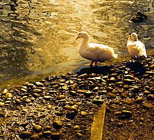 Two Duckies by picview