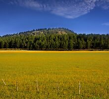 Farm landscape by snehit