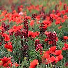Thousands of Beauties by vbk70