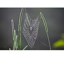 Dew Covered Web Photographic Print