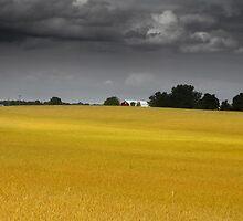 Wheat farm by snehit