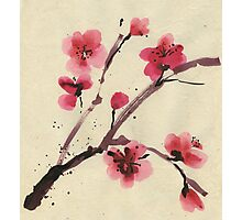 Flowering cherry. Spring. Photographic Print