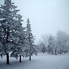 Misty Afternoon by Rhonda Blais