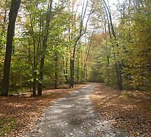 Fall Pa Trail by pambee68