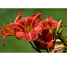 "Daylily ""Raging Wildfire"" Photographic Print"