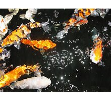 Koi and Stars Photographic Print
