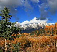The little tree and the Grand Teton view from the Cottonwood Creek  by Isabelle Norboge-Bindreiff