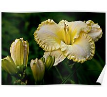 "Daylily ""First Knight"" Poster"