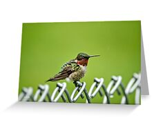 Hummingbird on a Fence Greeting Card
